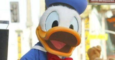 Hva kan du om Donald Duck – for juniorer